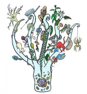 biology_tree